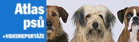 Atlas psů