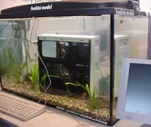 Oblíbená atrakce od Mironetů - počítč v akváriu