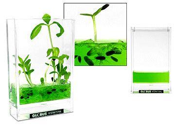 Plantarium (www.pulju.net)