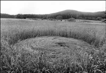 Kruh v obilí. Byly tady Ufouni?