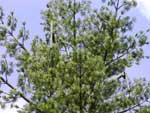 BTS strom