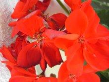 Digitální fotoaparát Umax 8330 - barevné podání - makro